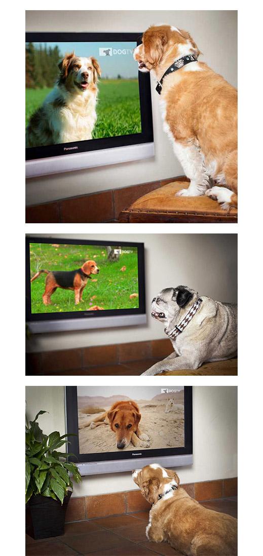 DOGTV Product